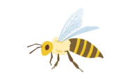 sk-honey-bee.png